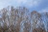 Trees / 木(き) (TANAKA Juuyoh (田中十洋)) Tags: 5d markii hi high res hires resolution 高精細 高画質 tochigi kanuma yokone plateau idoshitsugen wetlands 栃木 鹿沼 とちぎ かぬま 横根高原 よこねこうげん 高原 こうげん 井戸湿原 いどしつげん 樹 木 緑