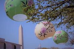 Cherry Blossom Parade DC 2018 (navonco) Tags: cherry blossom cherryblossom washingtondc parade washingtonmonument dc