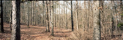 Backyard with Panorama Film Camera (Neal3K) Tags: 120film fujig617panoramacamera georgia kodakektar100 mediumformat panorama