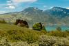 Blick richtung Justistal | Berner Oberland | Schweiz (stgenner) Tags: spiez natur outdoor berneroberland thunersee niederhorn justistal frühling kirschblüte stefangenner