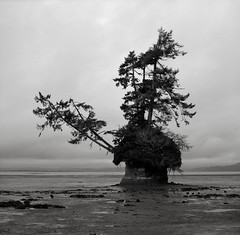 Island, Washington (austin granger) Tags: pedestal washington trees mushroom erosion geology lowtide shoreline beach determination perseverance square film gf670 coast