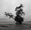 Island, Washington (austin granger) Tags: pedestal washington trees mushroom erosion geology lowtide shoreline beach determination perseverance square film gf670 coast