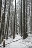 Spring Snow (acase1968) Tags: wagner butte snow mike rooney beagle rogue valley siskiyou mountain range cascade ashland talent oregon hiking hike nikon d750 nikkor 2485mm