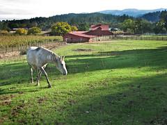 Home on the Range (skipmoore) Tags: sonomacounty horse barn pasture rural