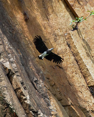 20180418-EM123183 (shutterblades) Tags: birds bukittimahnaturereserve dairyfarmnaturepark eagle greyheadedfisheagle olympusem1mkii olympusmzuiko300mmf4pro14tc singaporequarry