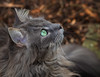 EYE see you ! (FocusPocus Photography) Tags: fynn fynnegan katze kater cat chat gato tier animal haustier pet grünesauge greeneye