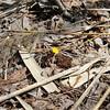 Jane's Walk - Falaise St-Jacques (cicatrix) Tags: urban ecology escarpment falaise montreal ndg notredamedegrace geology spring
