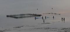 surreal fishing scene (louise peters) Tags: fishing vissen visnet women vrouwen vissersvrouwen eb mangapwani zanzibar tanzania afrika africa lowtide oceaan ocean indianocean indischeoceaan zee sea beach strand water sunset sundown zonsondergang surreal surrealistic surrealistisch