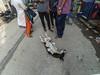 Dhaka Street #180 Acting like a drunker (سلطان محمود) Tags: dhaka bangladesh xiaomi yi action camera dog baby boy man woman roadside he acting is very friendly can act like drunk dhakastreet999 dhakastreet