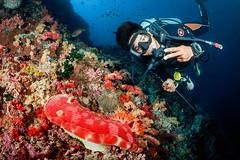 Huge spanish dancer on Pescador (Luko GR) Tags: philippines visayas cebu moalboal diving underwater pescador fisheyewideangle tokina1017 spanishdancer hexabranchussanguineus diver blue water colors red