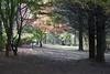 IMG_6640a (ManFromOz) Tags: ©geoffsmith gemaxphotographics autumn breenholdgardens mountwilson bluemountains