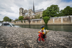 Marcel, a Parisian in Paris (Ballou34) Tags: 2017 7dmark2 7dmarkii 7d2 7dii afol ballou34 canon canon7dmarkii canon7dii eos eos7dmarkii eos7d2 eos7dii flickr lego legographer legography minifigures photography stuckinplastic toy toyphotography toys paris îledefrance france fr 7d mark 2 ii eos7d stuck plastic paris4earrondissement in cathedral notre dame bike dog