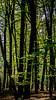 Chaos in the woods (cstevens2) Tags: belgique belgium belgië grensparkkalmthoutseheide kalmthout landscape landschap naturereserve bomen bos eikeblad hiking landscapephotography landschapsfotografie nature naturephotography natuur natuurfotografie natuurpark natuurreservaat oakleaf trees wandelen woods