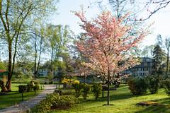 Japanese Garden in Kadriorg Park (HolgerVaga) Tags: brenizermethod