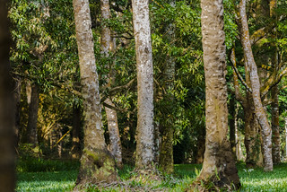 FORESTA    ----    FOREST