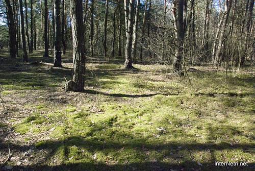 Волинський ліс Мох InterNetri Ukraine 0561866980