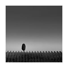 Outstanding (Nick green2012) Tags: tuscany illume tree vineyard square silence blackandwhite minimalism landscape
