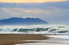 2016_01_02_9591-PS (DA Edwards) Tags: northern california coast shore pacific ocean point reyes water waves color da edwards photography winter 2016 birds beach wave sunset