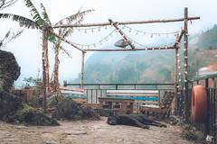 Best time for sleep on Mountain (nicksam.ca) Tags: nicksam368 nicksamca nicksam canon sapa vietnam hanoi hot new camera photographer top urban nice cool art nature mountain landscape