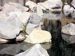 Green Heron Image (4) (Photo Nut 2011) Tags: ranchobernardo sandiego california greenheron webbpark