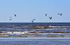 DSC_0177 (totenvogel7179) Tags: russia sosnovybor gulls