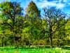 May Scenery (Kalev Vask.) Tags: digital kalevvask postprocessed photoshop photomanipulation digiart photoart painterly artistic creative estonia spring manipulated ownphoto phototopainting trees oaks 2018