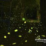 台灣,新北市,平溪區,石底大斜坑,青桐,螢火蟲 thumbnail