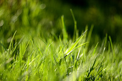 Green grass (Kapitalist63) Tags: grass green field helios81 area season light bright meadow spring cluster beauty nature park day morning bokeh lens soviet ussr