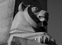 Llew / Lion (Rhisiart Hincks) Tags: blancinegre duagwyn gwennhadu dubhagusgeal dubhagusbán blackandwhite bw zuribeltz blancetnoir blackwhite monochrome unlliw blancoynegro zwartwit sortoghvid μαύροκαιάσπρο feketeésfehér juodairbalta