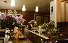 Lilacs bush'n out all over (danbruell) Tags: lilacs flower spring aroma cuttings neighbors brighton