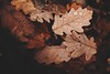 #PicOfTheDay Dry leaves (Candidman) Tags: dry leaves raindrops autumn brown yellow