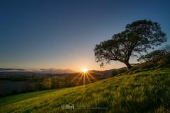 Tower - 13 May 2018 - 48-Edit.jpg (ibriphotos) Tags: clackmannanshire alloa sunset skyline wallacemonument ochilhills clackmannan evening goldenhour sky sunsets