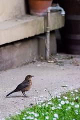 fauvetteagain (YassChaf) Tags: paris birds wildbirds oiseaux urbanbirds citybirds
