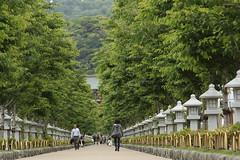 The Pathway to Tsurugaoka Hachiman Shrine (seiji2012) Tags: 鎌倉 石灯籠 参道 kamakura stonelantern japan