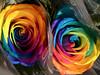 Arc de Sant Martí en Roses (queropere) Tags: roses colors arcdesantmartí diversitat aromes santjordi2018 salt queropere