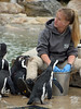 Hey, Pay Attention! (MTSOfan) Tags: lvz penguins feeding keeper bucket
