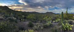 Panorama of the desert - Tucson, AZ (bcbirdergirl) Tags: tucson az arizona us usa elcaminodelcerrotrailhead saguaro panorama pimacounty