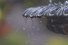 percolate (charhedman) Tags: iwenttoseeflowersbutendedupjustshootingthewaterfountain shoreacresstatepark botanicalgarden oregoncoast droplets spray water flowers fountain