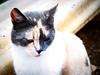 3673 - Macchia (Diego Rosato) Tags: macchia gatto cat animal animale pet fuji x30 rawtherapee