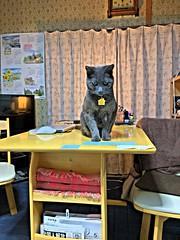 Glowing Bonkers (sjrankin) Tags: japan hokkaido yubari kitchen table glow hdr bonkers cat animal edited 10may2018