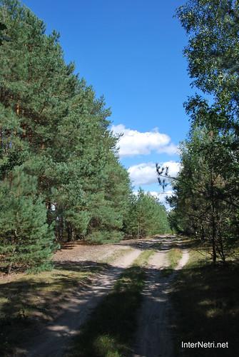 Волинський ліс Лісова дорога InterNetri Ukraine 0888525643