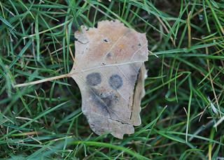 134/365 Smiley Leaf