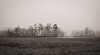 fog in the marsh (jtr27) Tags: dscf8163xl jtr27 fuji fujifilm xe2s xe2 xtrans xf 1855mm f284 rlmois lm ois kitlens kitzoom fog marsh scarborough maine landscape bw monochrome blackandwhite