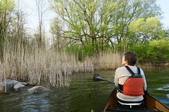 Reeds and willow (deanspic) Tags: canoe canoeing paddle paddling shore sedges willow g3x reeds