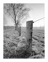 wood (rcfed) Tags: hasselblad mediumformat film trix rodinal stand bw tree light