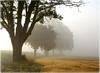 Heute früh um sieben (ernst.koeppel) Tags: trees mist fog nebel neblig foggy baum bäume natur nature landscape landschaft deutschland bayern bayaria franconia oberfranken 24er atmosphere atmosphäre