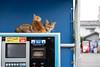 猫 (fumi*23) Tags: ilce7rm3 sony 55mm sonnartfe55mmf18za sel55f18z a7r3 chat gato neko cat parking miyazaki sonnar animal street ねこ 猫 ソニー 宮崎 bokeh kitten