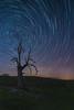 Solo - Alone (teredura58) Tags: circumpolar startrails entzia nocturna arboles estrellas