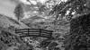 golden clough (Royston King) Tags: goldenclough kinderscout derbyshire peakdistrict peakpark nationaltrust streams bridges rx10 monochrome landscapes