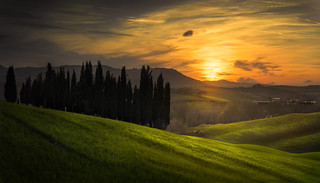 Cypresses at Sunset.